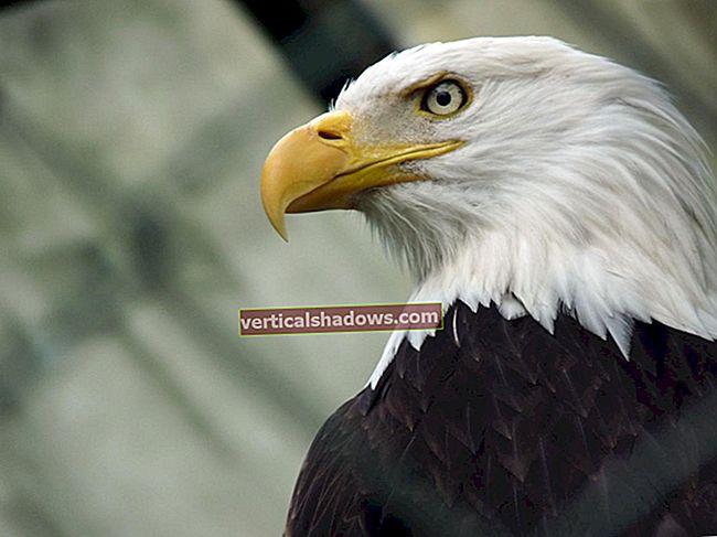 Apache Eagle dohlíží na využití velkých dat
