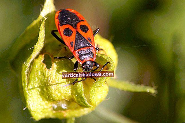 Mozilla squasher Firebug til fordel for native Firefox-fejlfindingsprogrammet